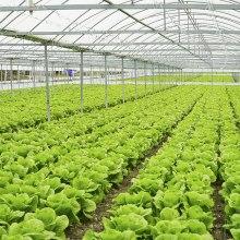 Vyhrievanie pôdy v skleníkoch.
